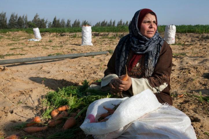 Egypt_West Noubaria Development Project_April_2012